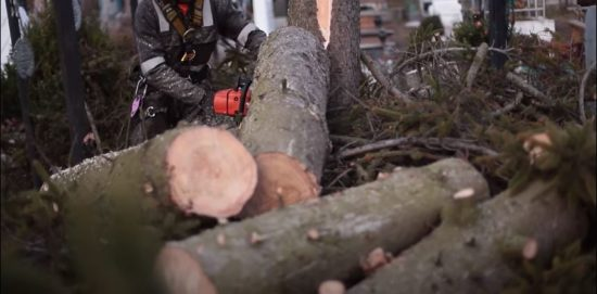 Tree Cutting - Leinad Tree Service