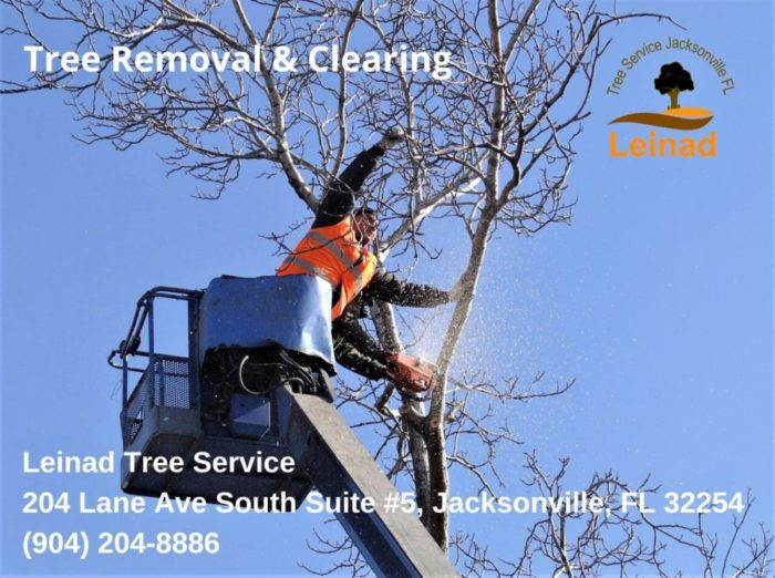 Tree Removal & Clearing Jax - Leinad Tree Service