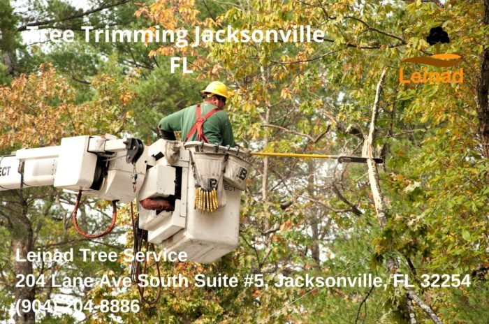 Tree Timming Jacksonville - Leinad Tree Service