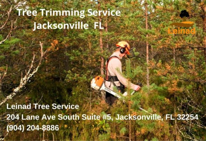 Tree Trimming & Pruning Service - Leinad Tree Service